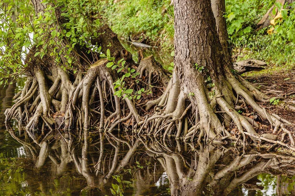 Bäume im Dagowsee